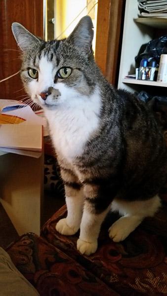 Matt Miller Cat