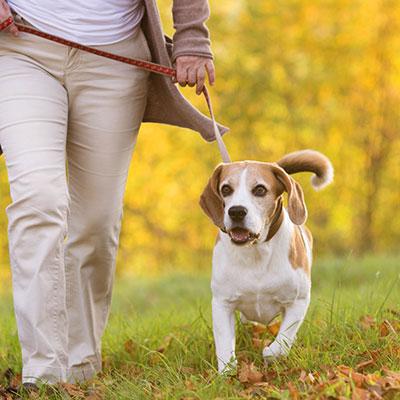 Dog Walking Services