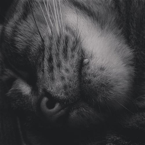 Duane Miller Cat