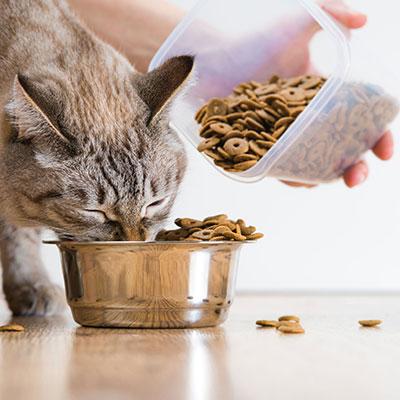 Pet Feeding Services