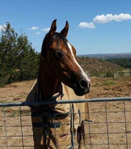 Horse of Melissa Jane