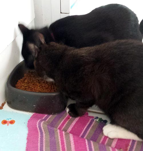 Cats of Vivienne Johnston Thomas